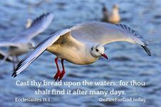 Ecclesiastes 11:1