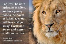 Hosea 5:14