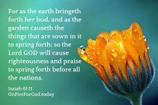 Isaiah 61:11