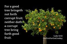 Luke 6:43