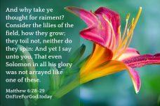 Matthew 6:28-29