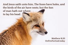 Matthew 8:20