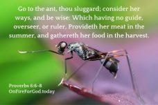 Proverbs 6:6-8