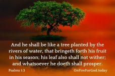 Psalms 1:3