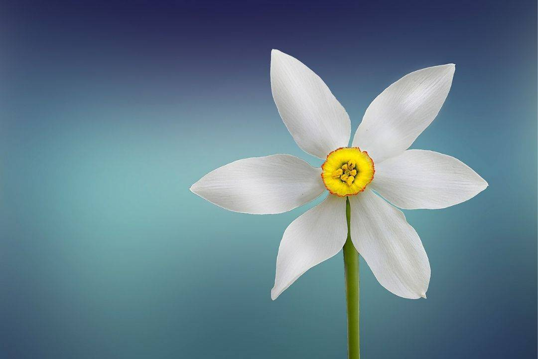 Genesis 50:20 Flower